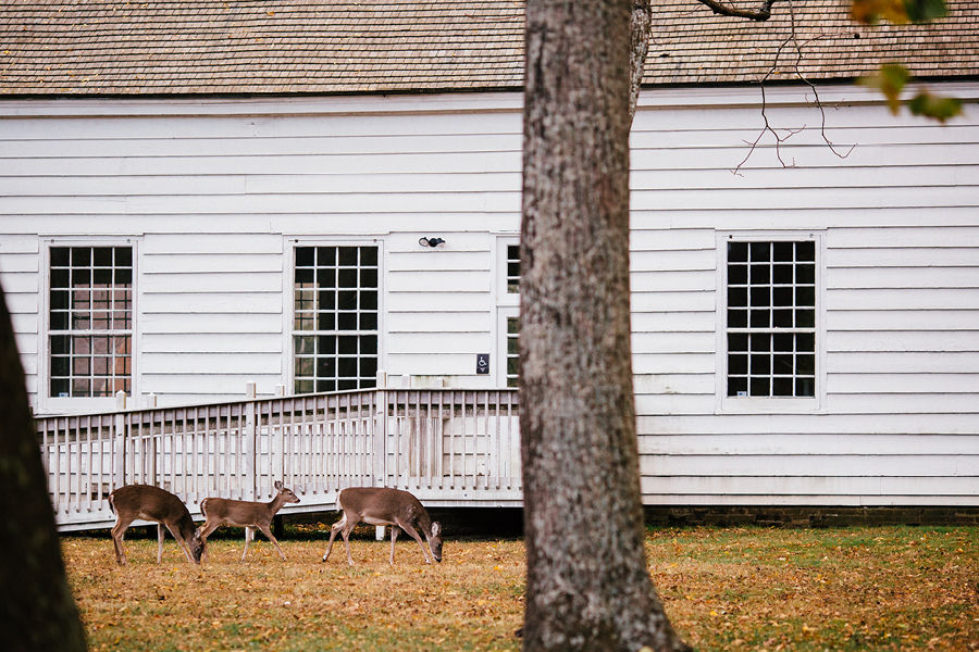 deer at allaire state park