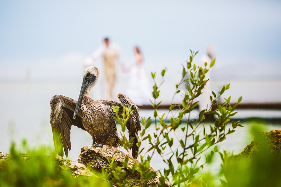 South Seas Island Resort Wedding