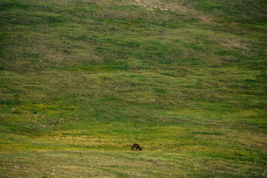 Travel-Photography-Denver-Colorado_0072