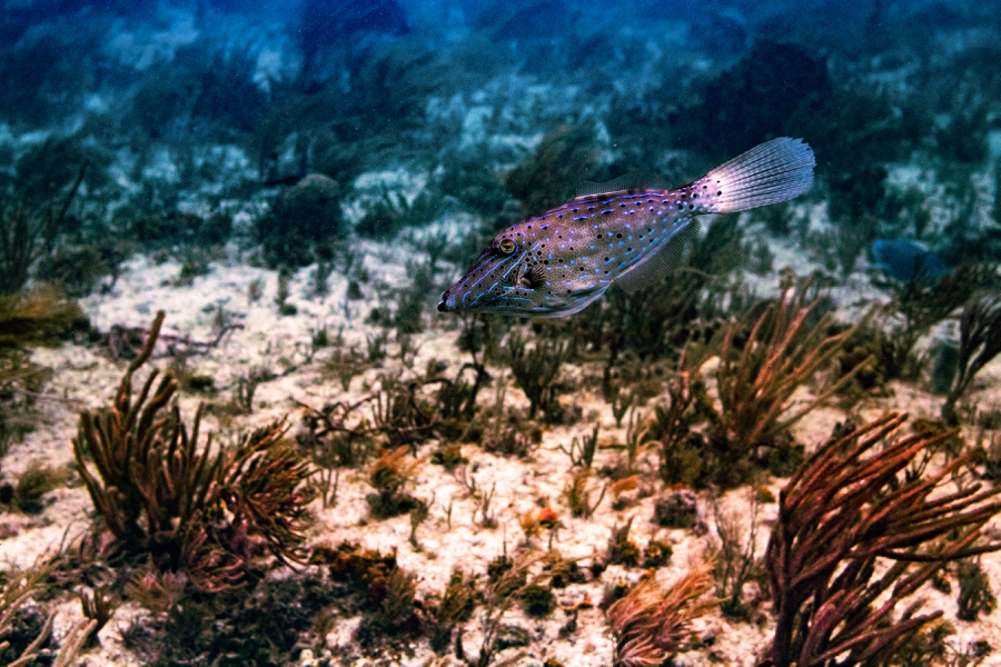 scuba-diving-in-key-largo