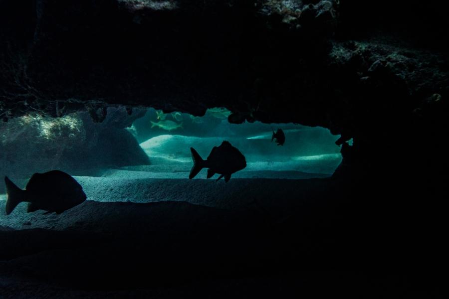 underwater-photography-florida-keys_0021