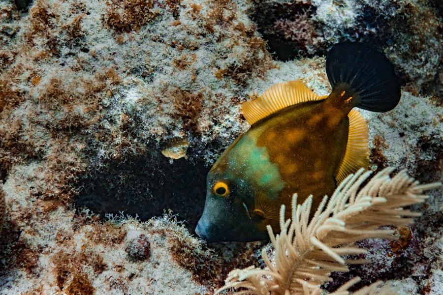 underwater-photography-florida-keys_0023