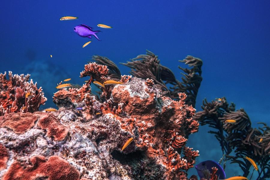 underwater-photography-florida-keys_0025