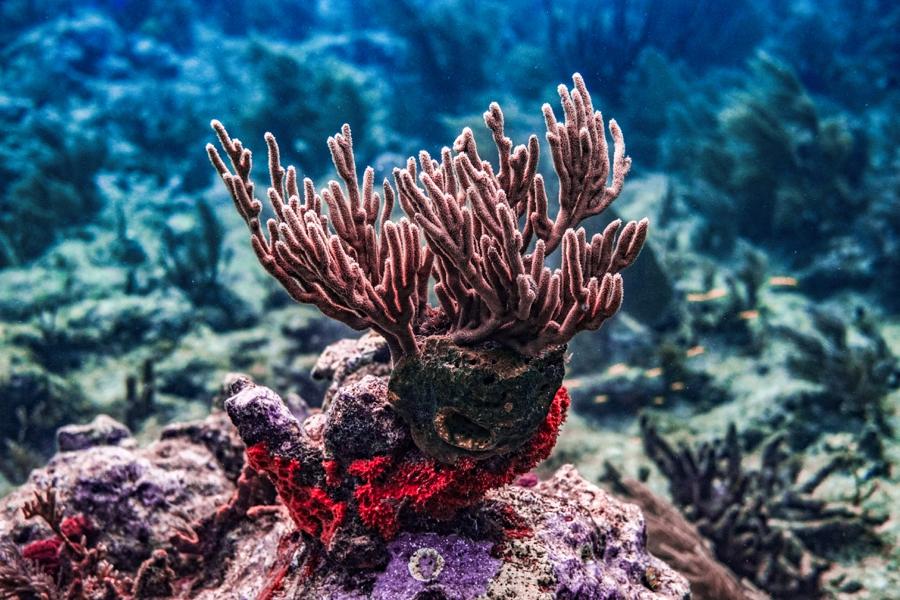 underwater-photography-florida-keys_0026