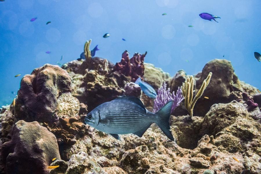underwater-photography-florida-keys_0027