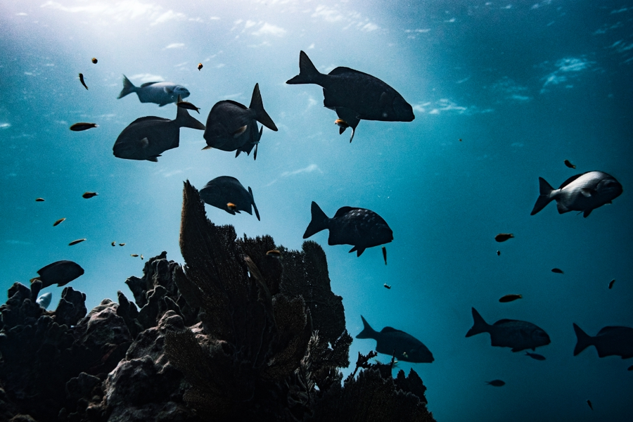 underwater-photography-florida-keys_0028