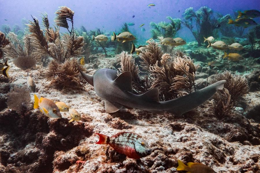 underwater-photography-florida-keys_0031