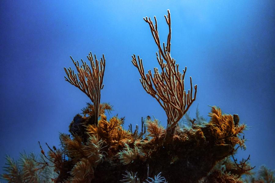 underwater-photography-florida-keys_0034