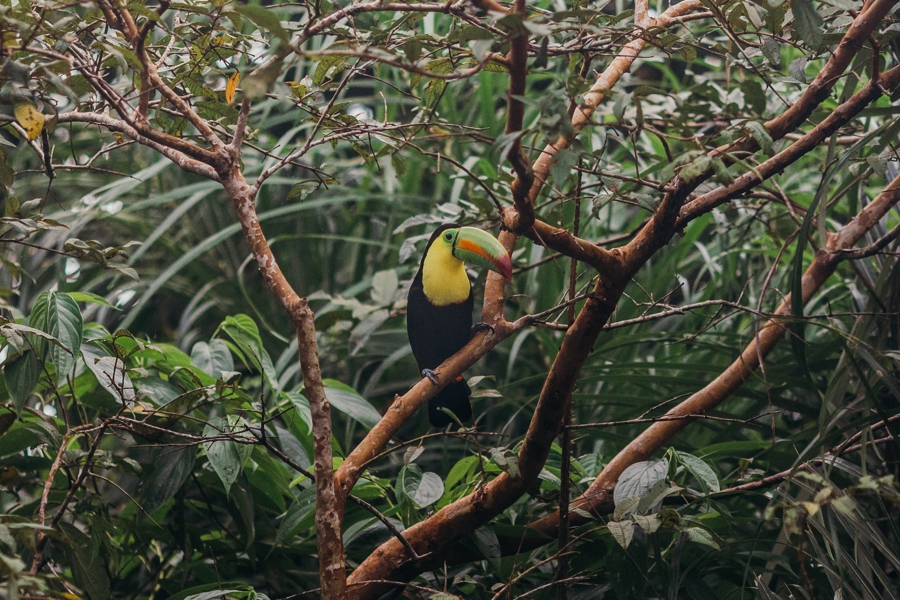 costa-rica-nicaragua-travel-photography_0012