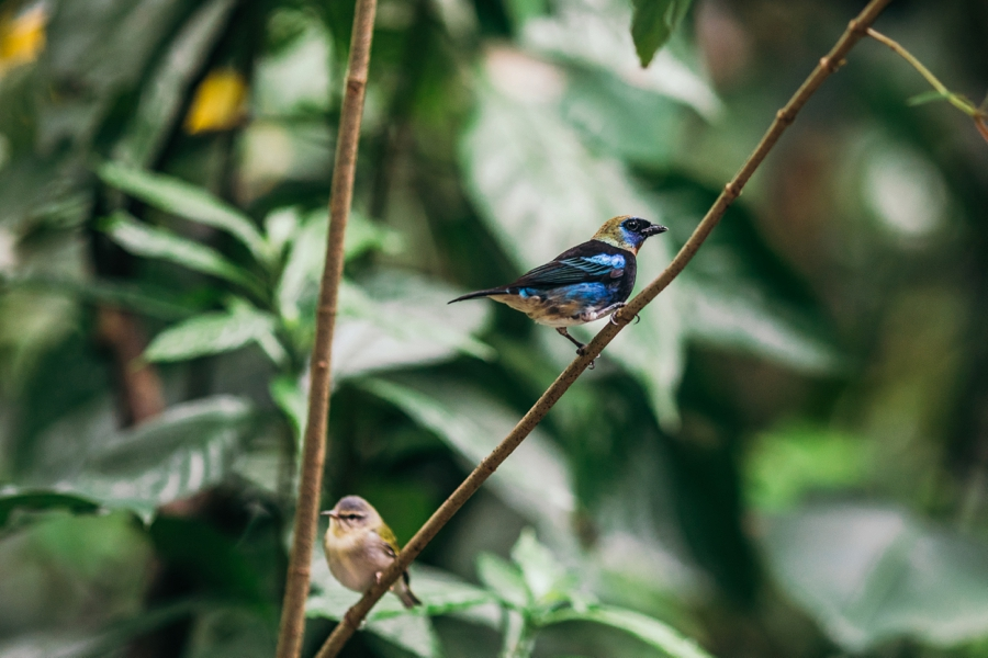 costa-rica-nicaragua-travel-photography_0031